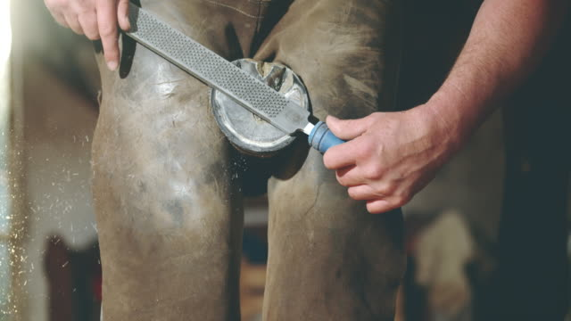 slo mo farrier using a rasp to smooth edges - horseshoe stock videos and b-roll footage