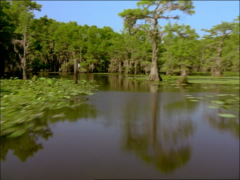 vidéos et rushes de fast boat point of view in swamp with cypress trees / caddo lake, texas - cinématographie