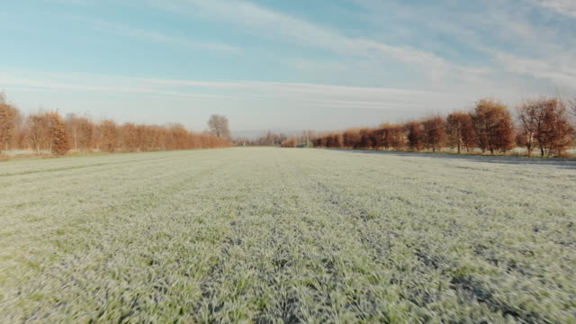 vidéos et rushes de fast drone shot over a frozen cultivated filed with frost and tree lines in the padan plain region, veneto, italy. - italian culture