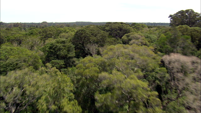 Fast Flight Across Forest In the Tsitsikamma National Park  - Aerial View - Eastern Cape,  South Africa