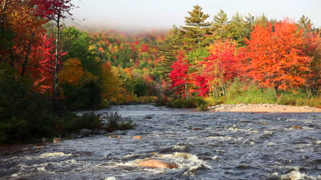 fast flowing river in autumn - new england usa stock videos & royalty-free footage