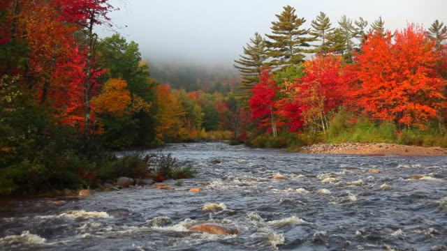 Fast Flowing River in Autumn