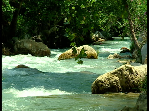 Fast flowing river moves past large boulders and overhanging tree branches