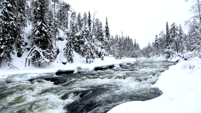fast flowing river winter snow spruce forest juuma oulanka nat pk finland - peter snow stock videos & royalty-free footage