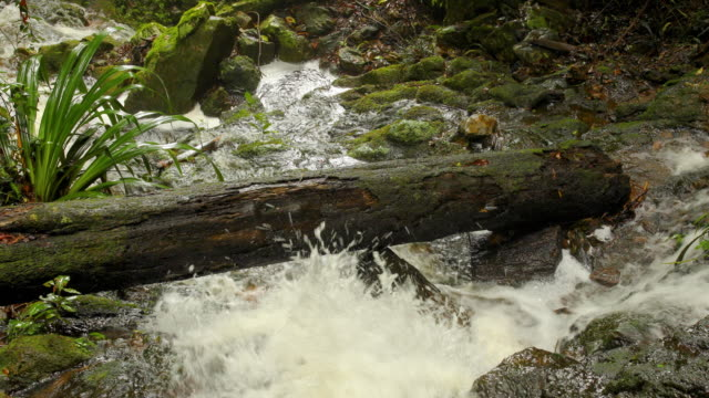 fast flowing stream and fallen log in australian rainforest - moss stock videos & royalty-free footage