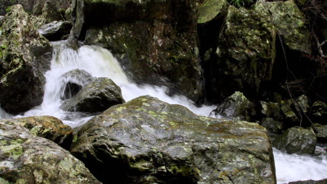fast flowing stream in australian rainforest after heavy rainfall - moss stock videos & royalty-free footage
