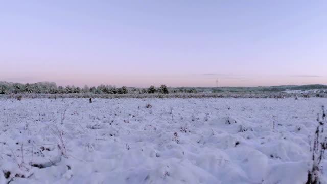 stockvideo's en b-roll-footage met fast flying very low above the meadow - verkoudheidsvirus