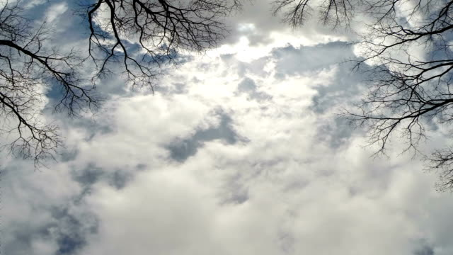 fast moving clouds - bare tree stock videos & royalty-free footage