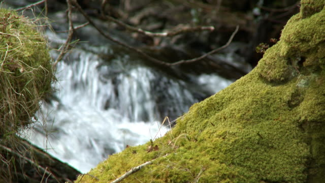 fast river flowing behind a mossy bank - narrow stock videos & royalty-free footage