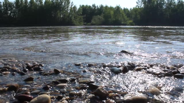 fast river stream - pebble stock videos & royalty-free footage