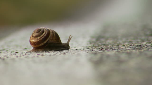 fast snail - snail stock videos & royalty-free footage