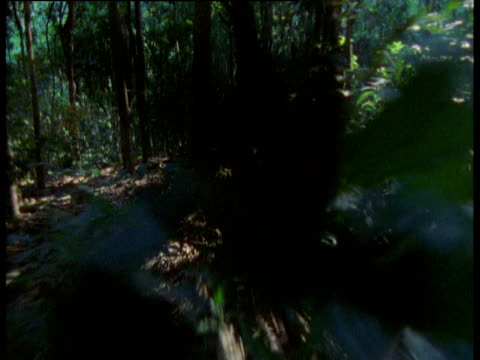 """fast track through forest, gombe national park, tanzania - """"bbc natural history"""" stock videos & royalty-free footage"""