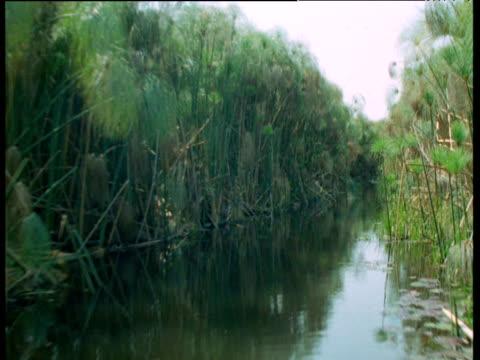 fast track through papyrus lined waterways - 空気力学点の映像素材/bロール
