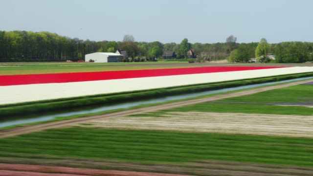 fast train passing tulips field around lisse in holland - the hague stock videos and b-roll footage