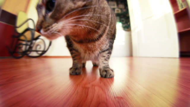 fat cat - fish eye lens stock videos & royalty-free footage