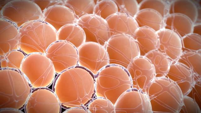 vídeos de stock, filmes e b-roll de fat cells, animation - tecido humano