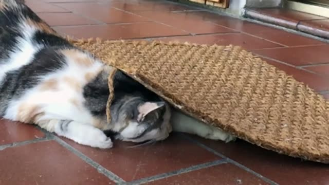fat domestic cat playing with a little snake hidden below the doormat - welcome mat stock videos and b-roll footage