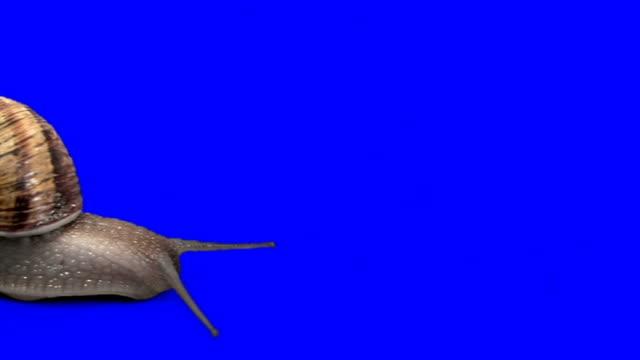 fat weinbergschnecke (timelapse - tierkörper stock-videos und b-roll-filmmaterial