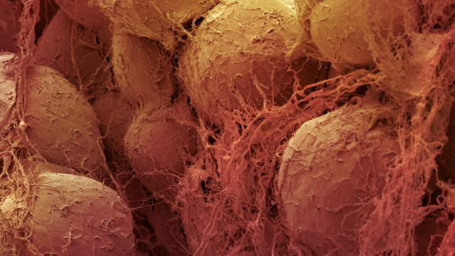 """fat tissue, sem"" - microscope stock videos & royalty-free footage"
