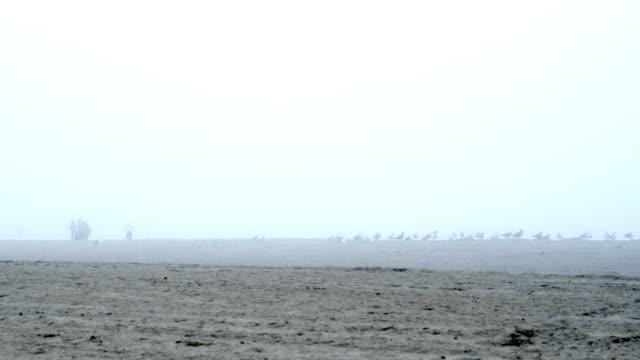 vater und kinder auf foggy beach - tier familie stock-videos und b-roll-filmmaterial