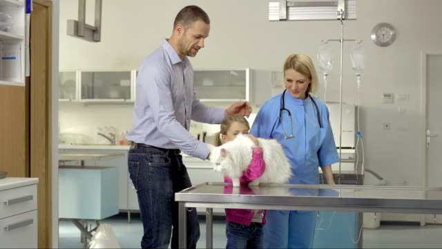 father and daughter bringing a cat to the clinic - examination table stock videos & royalty-free footage