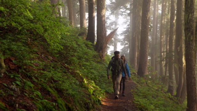 vidéos et rushes de ms father and daughter hiking together on trail through forest - découverte