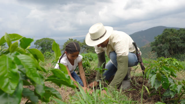 father and daughter planting a coffee plant - lavoratore agricolo video stock e b–roll