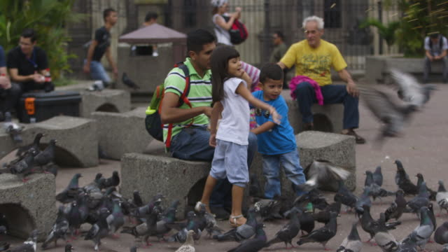 father and his two children feed birds in costa rican town square, wide shot - costa rica stock-videos und b-roll-filmmaterial