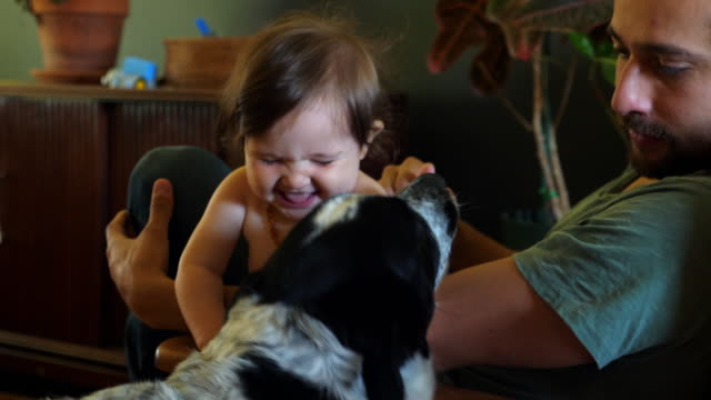 vídeos de stock e filmes b-roll de ms father and infant daughter sitting in chair in living room playing with family dog - qualidade