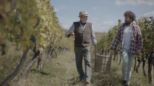 vídeos y material grabado en eventos de stock de padre e hijo portando cesta de uvas - uva cabernet sauvignon