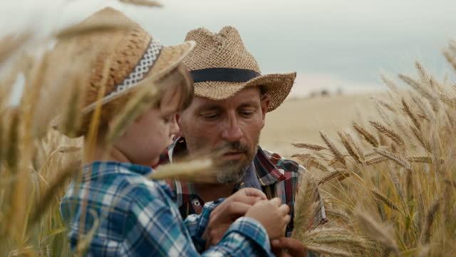 vidéos et rushes de père et fils examinant la récolte au milieu du champ de blé - enseigner