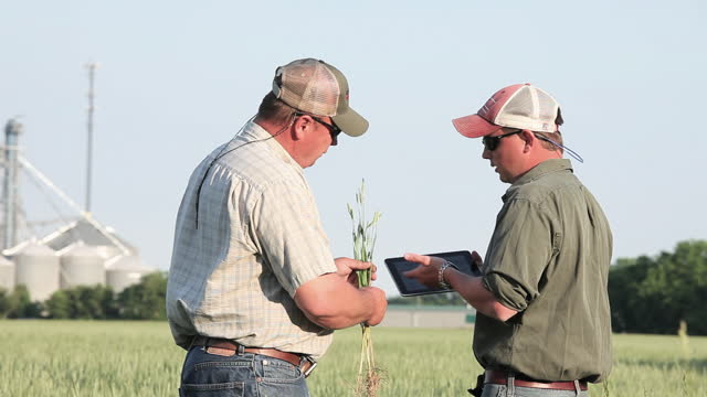 father and son farmers talking and using digital tablet in sunny wheat field - due persone video stock e b–roll