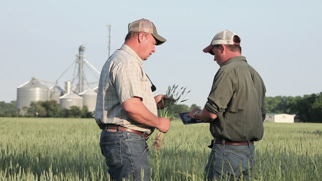 Father and son farmers talking and using digital tablet in sunny wheat field