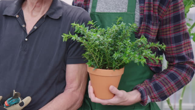 father and son gardening in greenhouse - pruning shears stock videos & royalty-free footage