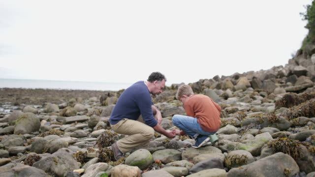 father and son looking at shells in rockpool on beach - しゃがむ点の映像素材/bロール