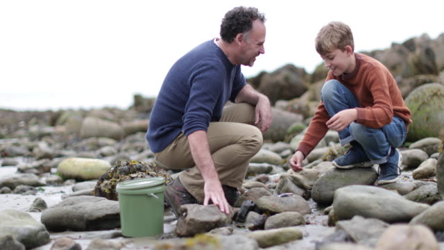 Father and Son looking at shells in rockpool on beach