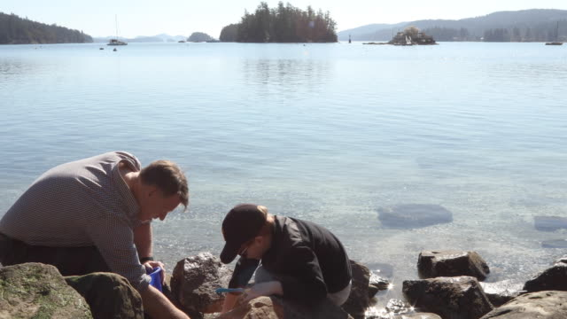 father and son looks for crabs on west coast beach - three quarter length stock videos & royalty-free footage