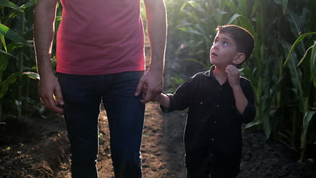 father and son on corn field - three quarter length stock videos & royalty-free footage