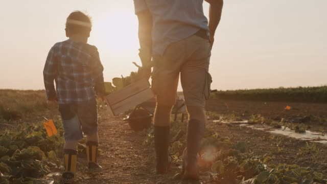 slo mo father and son picking vegetables in the field - land stock videos & royalty-free footage