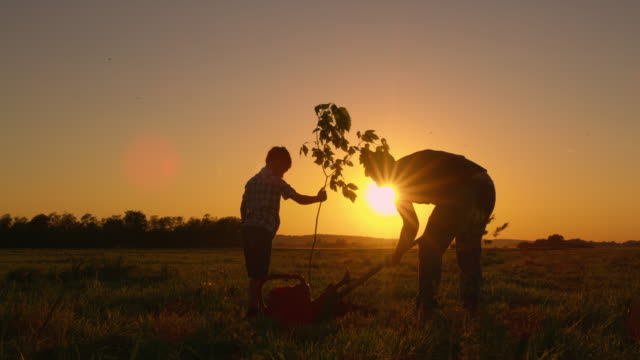 ds father and son planting a tree in the yard - dolly shot stock videos & royalty-free footage