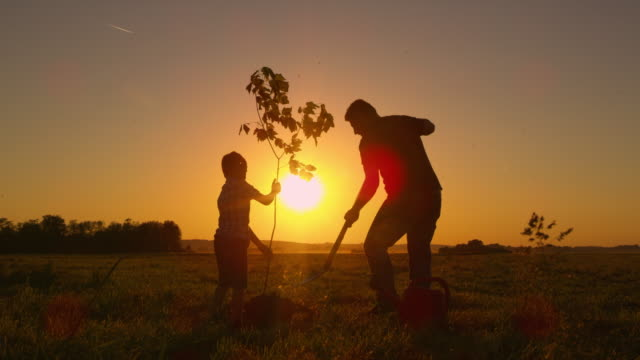 DS Father and son planting a tree on a field