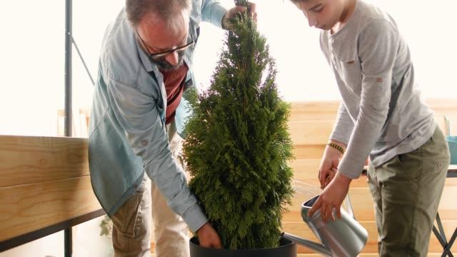 vidéos et rushes de père et fils, plantation d'arbre sur le balcon - arroser