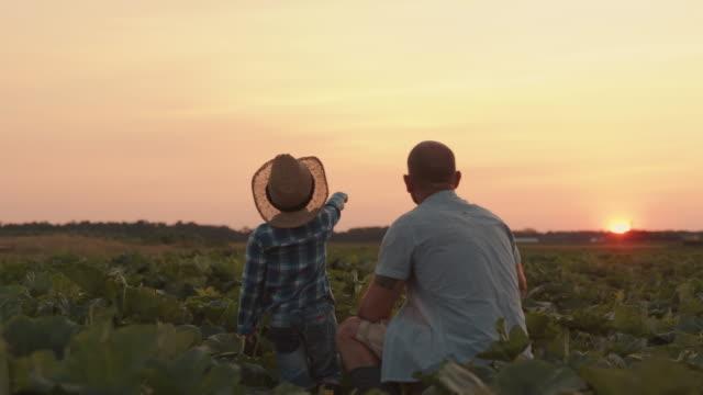 vídeos y material grabado en eventos de stock de slo mo padre e hijo apuntando con los dedos en la distancia en un campo al atardecer - actividad de agricultura