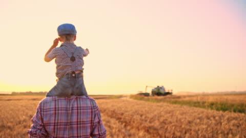 slo mo far och son gå igenom odlade fält - bonde jordbruksyrke bildbanksvideor och videomaterial från bakom kulisserna