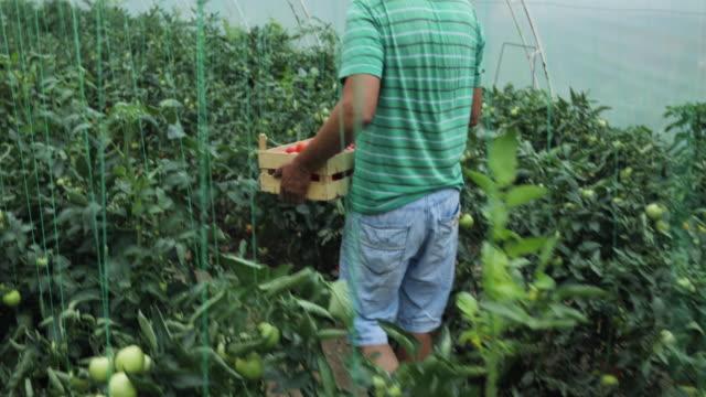 stockvideo's en b-roll-footage met vader en zoon met prothetische been uitvoering karren gevuld met tomaten - carrying