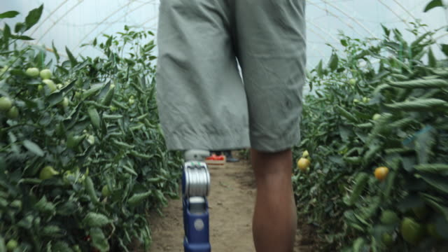 father and son with prosthetic leg carrying carts filled with tomatoes - prosthetic equipment stock videos & royalty-free footage