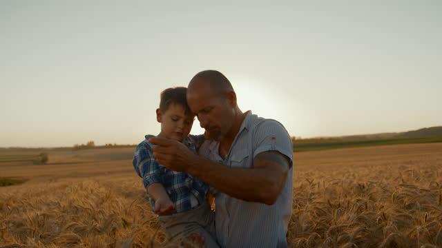 vidéos et rushes de père et fils avec des grains de blé sur le domaine agricole - famille monoparentale