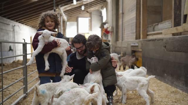 vater und zwei kinder spielen mit ziegenbabys - große tiergruppe stock-videos und b-roll-filmmaterial
