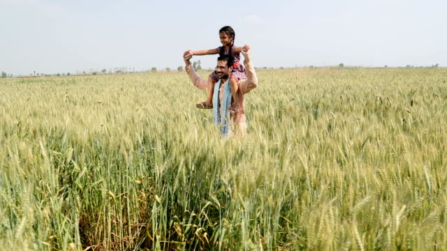 stockvideo's en b-roll-footage met ws pov father carrying daughter on his shoulders while walking in wheat field / samalkha, haryana, india - genderblend