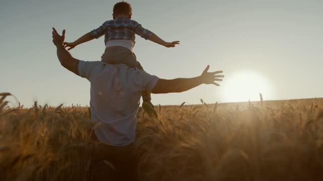 vidéos et rushes de fils de transport de père au milieu du domaine de blé - famille monoparentale